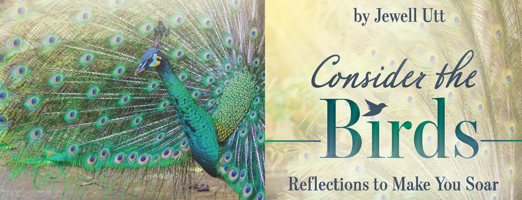 Consider the Birds ~ Reflections to Make You Soar